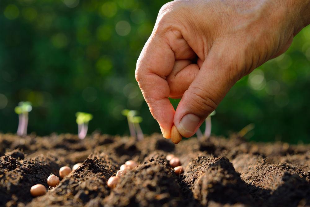 کاشت بذر