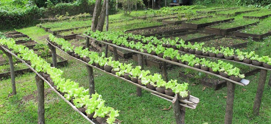 کسبوکار کشاورزی