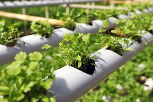 کشاورزی مکانیزه